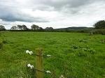 Ballybiggane, Cloncagh, Co. Limerick
